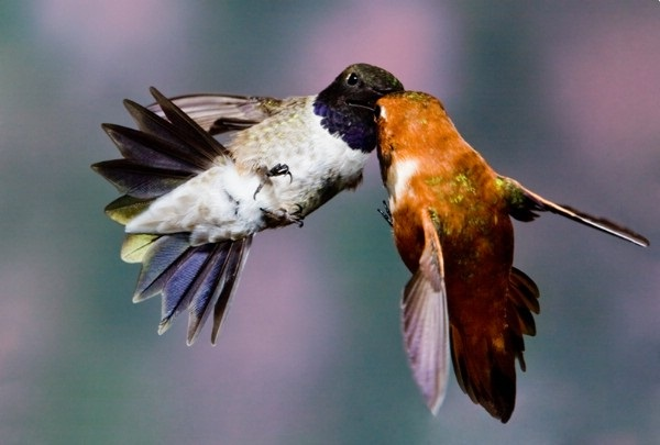 love-birds-kissing- (16)
