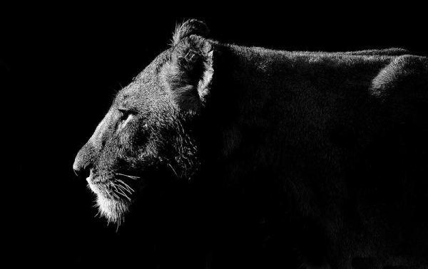 wildlife-of-africa- (2)
