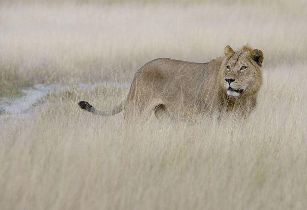 wildlife-of-africa- (5)