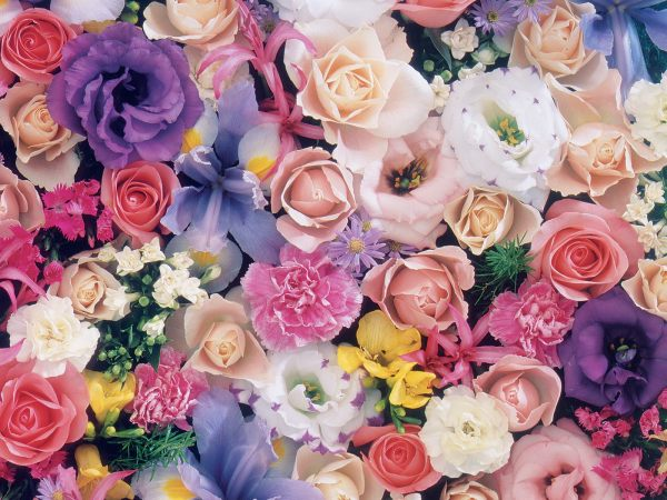 beautiful-flowers-wallpapers- (7)