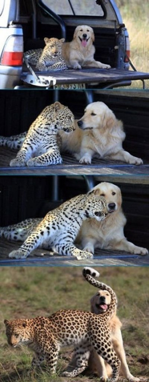 animal-friends-40-photos- (3)