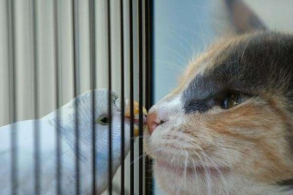 animal-friends-40-photos- (7)