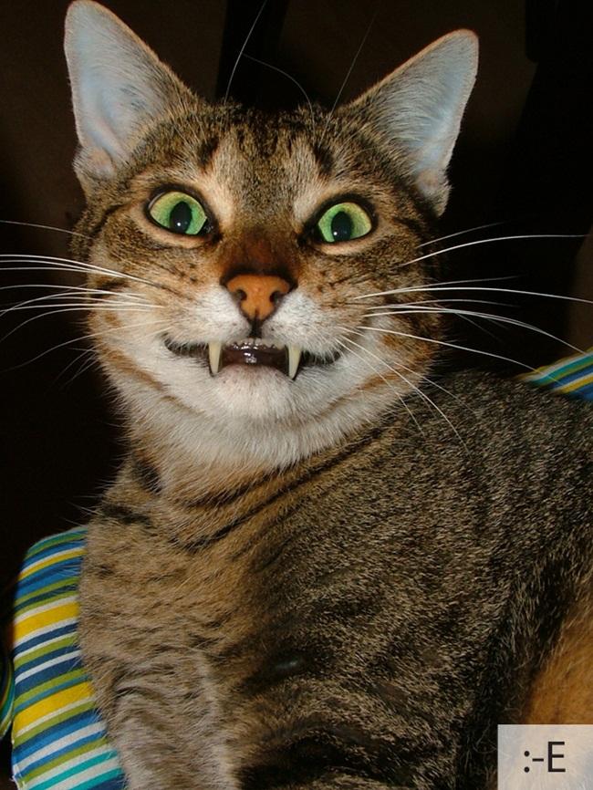 funny-cat-emotions- (12)