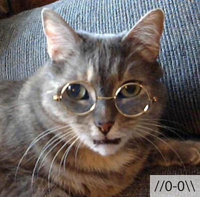 funny-cat-emotions- (22)