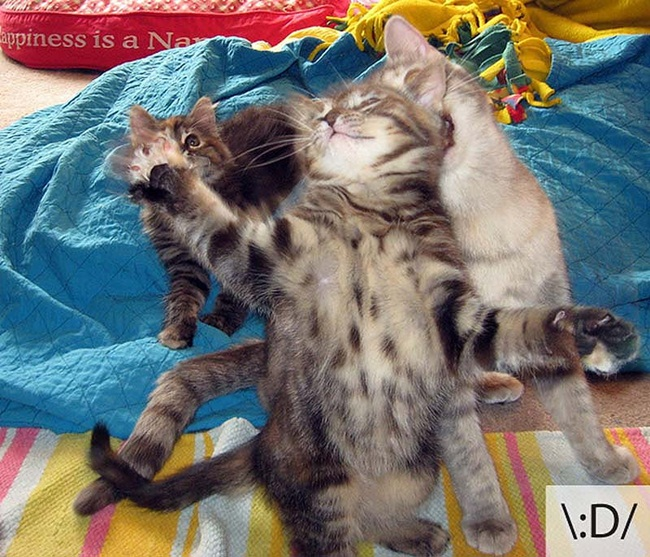 funny-cat-emotions- (5)
