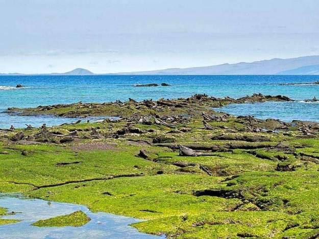 galapagos-island-45-photos- (2)