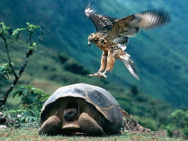 galapagos-island-45-photos- (22)