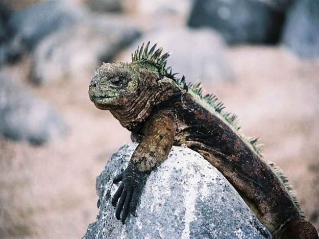 galapagos-island-45-photos- (23)