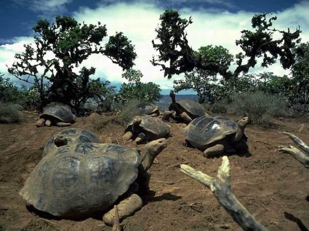 galapagos-island-45-photos- (31)