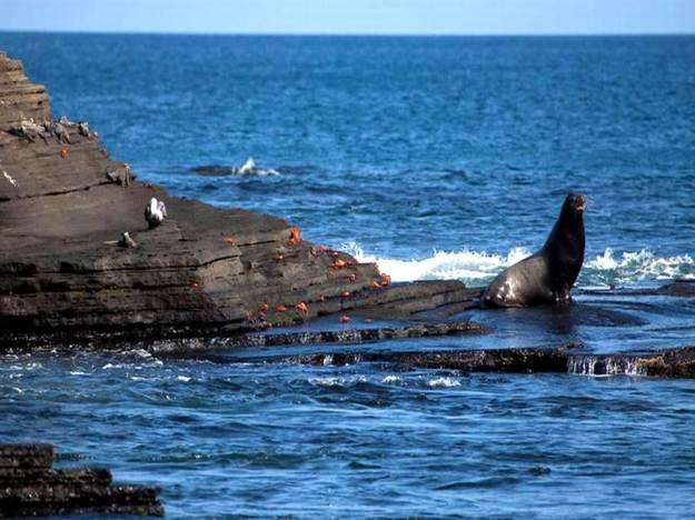 galapagos-island-45-photos- (7)
