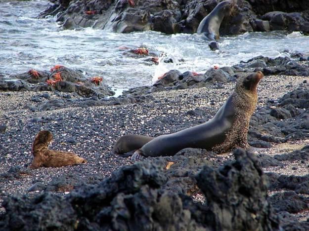galapagos-island-45-photos- (9)