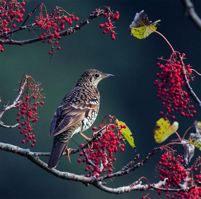 beautiful-birds-photos-by-john-soong- (6)