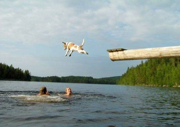 really-funny-pictures-20-photos- (9)