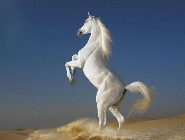 wild-horse-pictures- (1)