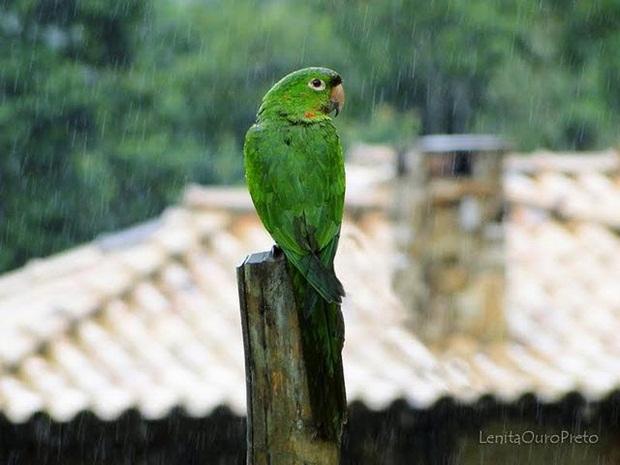 birds-in-rain- (11)