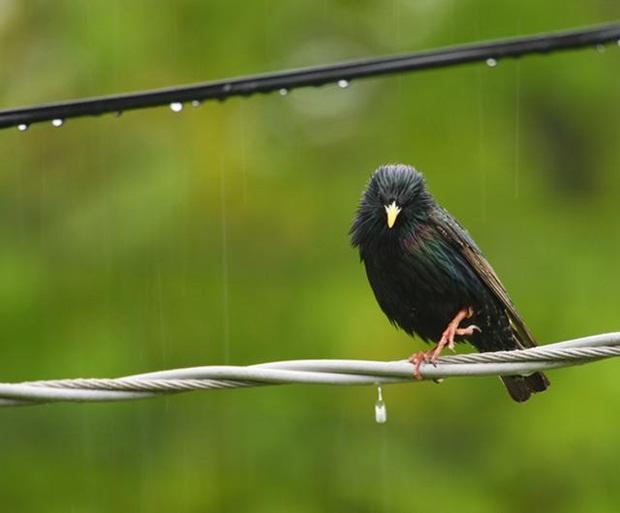 birds-in-rain- (22)