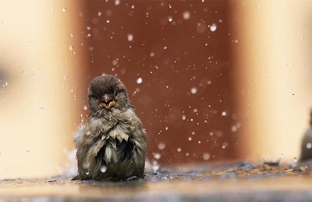 birds-in-rain- (27)