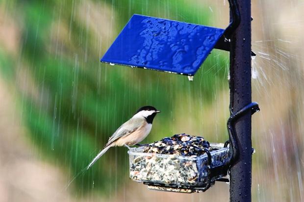 birds-in-rain- (3)
