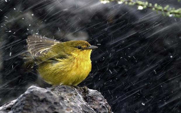 birds-in-rain- (6)