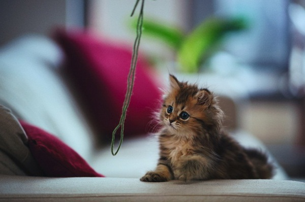 cute-kitten-daisy- (2)