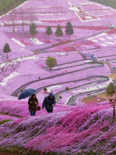 hitachi-seaside-park-japan-24-photos- (3)