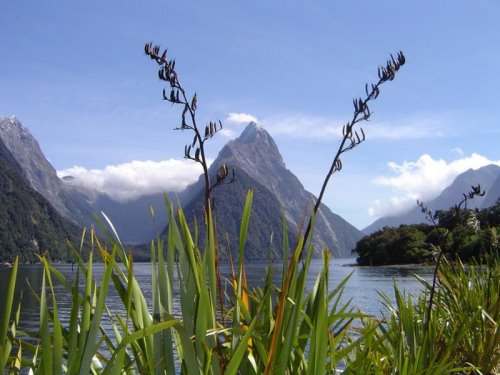 new-zealand-30-photos- (5)