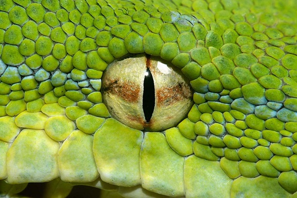 35-snakes-pictures- (3)
