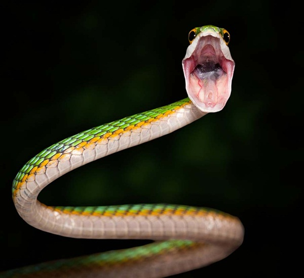 35-snakes-pictures- (4)