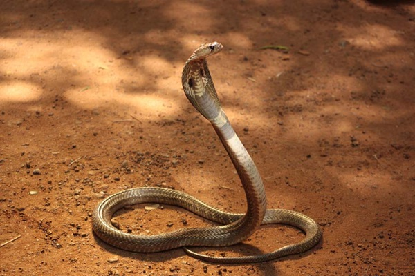 35-snakes-pictures- (6)
