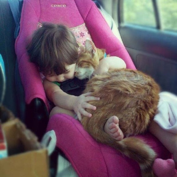 babies-and-cats- (4)