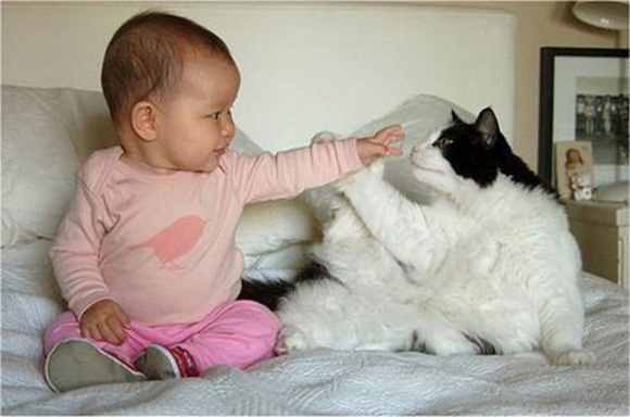 babies-and-cats- (5)