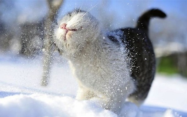 animals-in-snow- (2)
