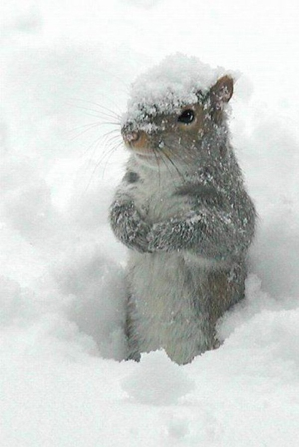 animals-in-snow- (21)