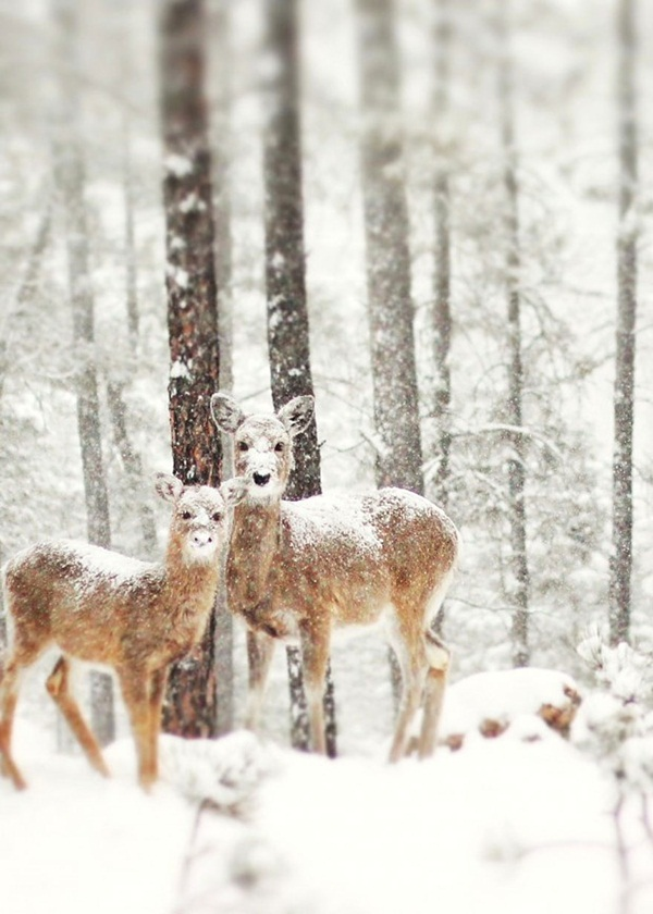 animals-in-snow- (22)