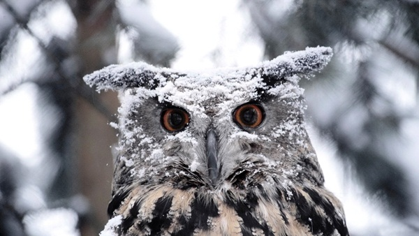 animals-in-snow- (27)