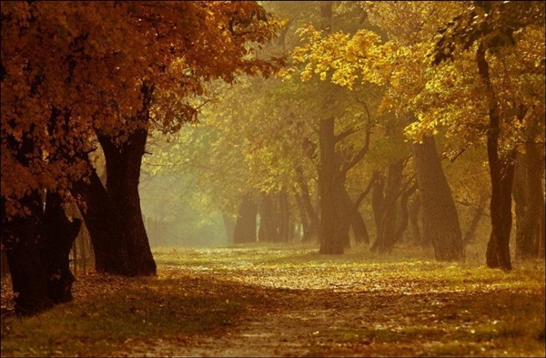 beautiful-autumn-20-pictures- (19)