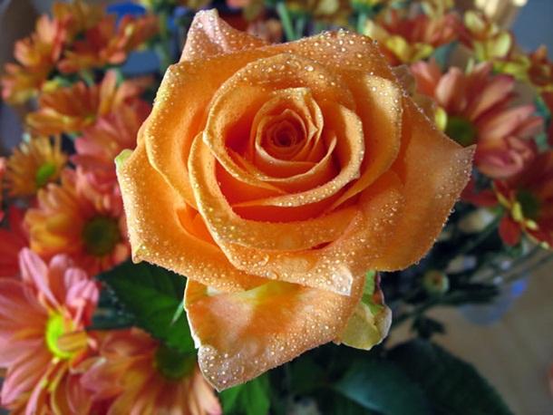 best-roses-26-photos- (14)
