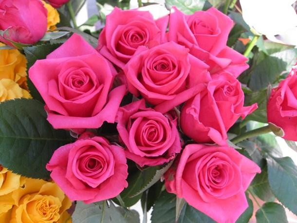 best-roses-26-photos- (2)