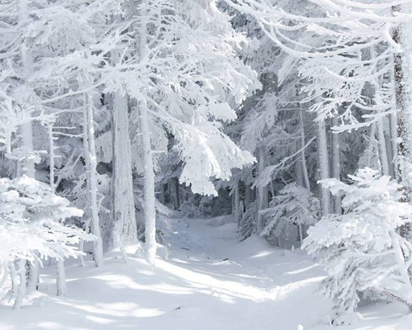 26-winter-photos- (12)