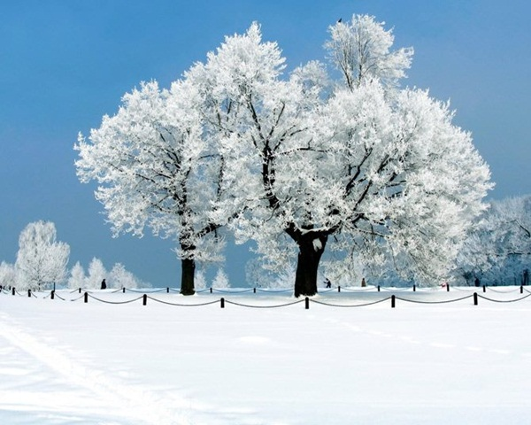 26-winter-photos- (4)