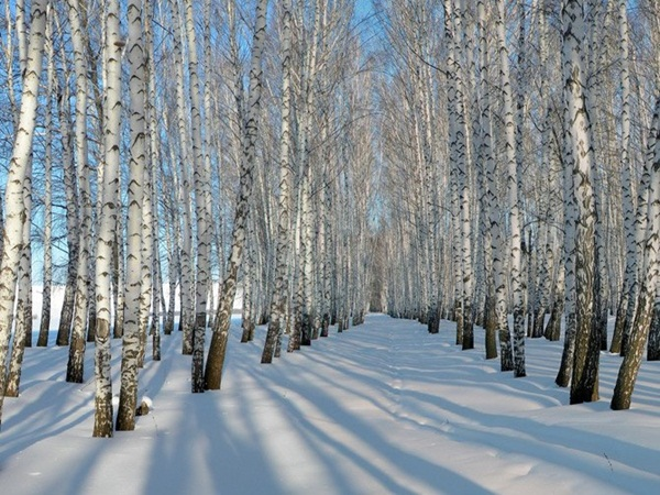 26-winter-photos- (9)