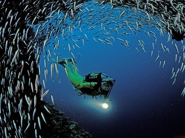 underwater-photos- (4)