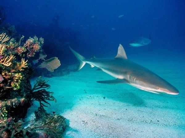 underwater-photos- (5)