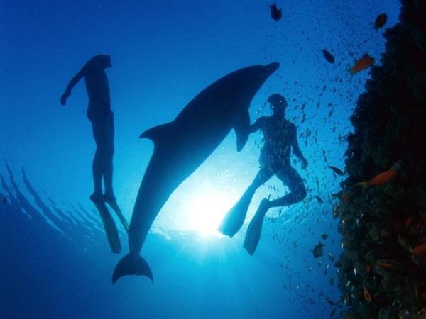 underwater-photos- (6)