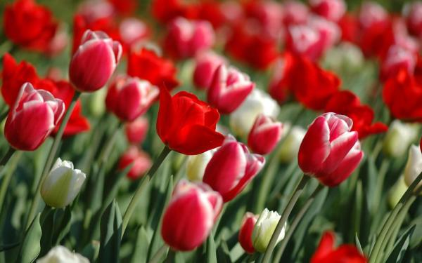 spring-wallpapers- (15)
