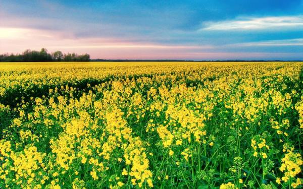 spring-wallpapers- (8)