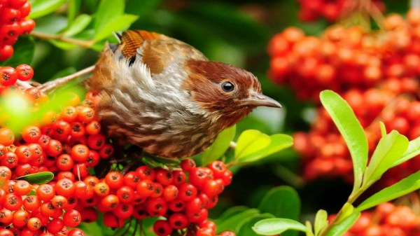 birds-wallpaper-20-photos- (1)