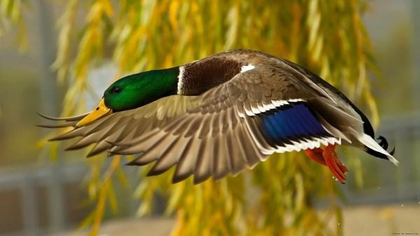 birds-wallpaper-20-photos- (13)