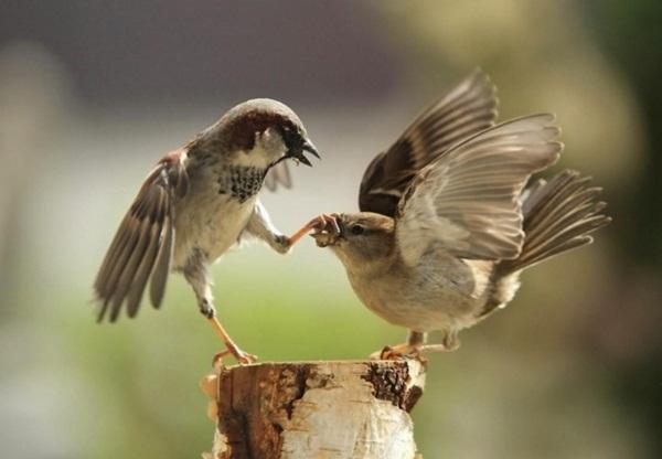 funny-birds-40-photos- (18)