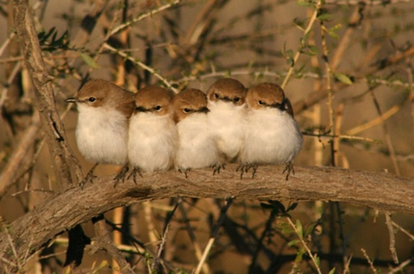 funny-birds-40-photos- (22)